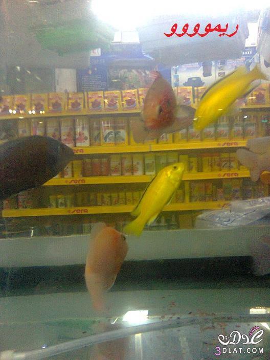 [بعدستي] صور أسماك الزينه ,صور احواض السمك من تصويرى, حوض سمك الزينه, أسماك زينه ملون 13887834041.jpg