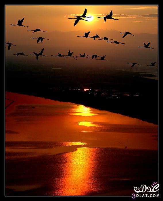 صور غروب الشمس صور عن غروب الشمس صورالشمس غائبه صور الغروب الرائع 13890343883.jpg