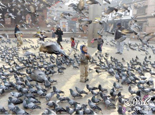 نيبالي طيور الحمام ساحة دوربار