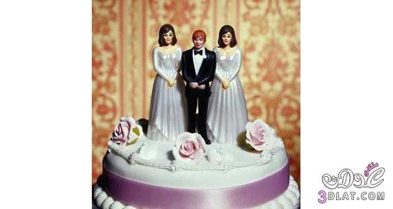 قصيده تزوج امرأتين....ههههههه