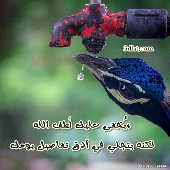 مصوره 2019 مصوره جديده الحياه تصميمي 3dlat.com_02_18_9073