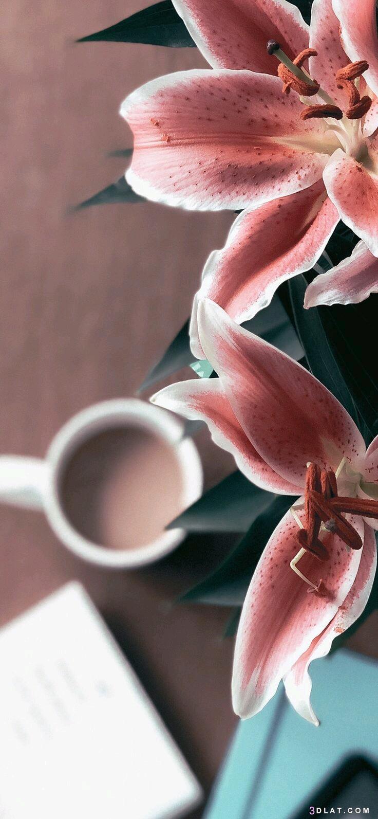 خلفيات ايفون كيوت خلفيات جلاكسي اس اجمل صور وخلفيات للهاتف