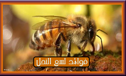 فوائد النحل 3dlat.com_02_19_89f3