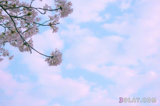 صور ورود طبيعيه أزهار من الطبيعه خلفيات ورد وزهور رائعه من