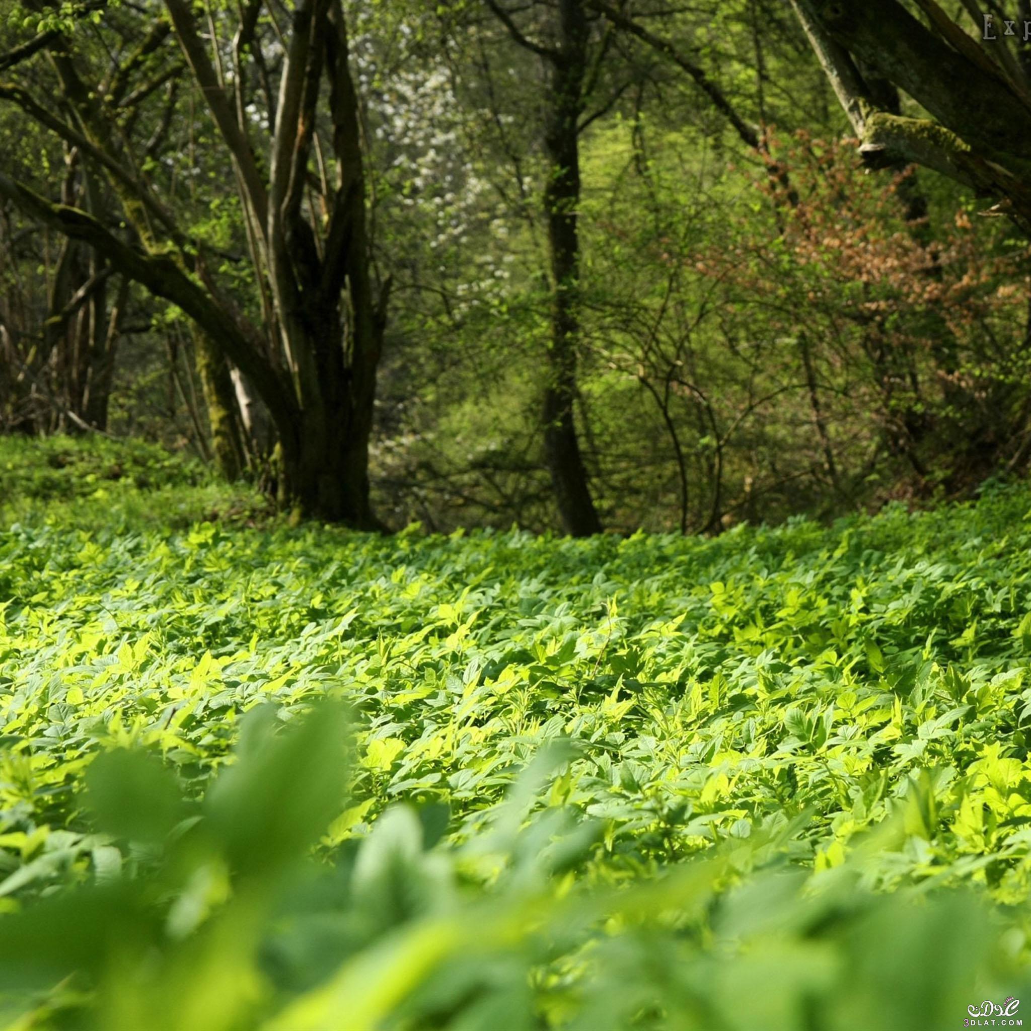 صور طبيعيه للنباتات والاشجار والطرق روعه,صور طبيعيه مذهله ,صور طبيعيه متنوعه 2015 3dlat.com_04_2014)Fo