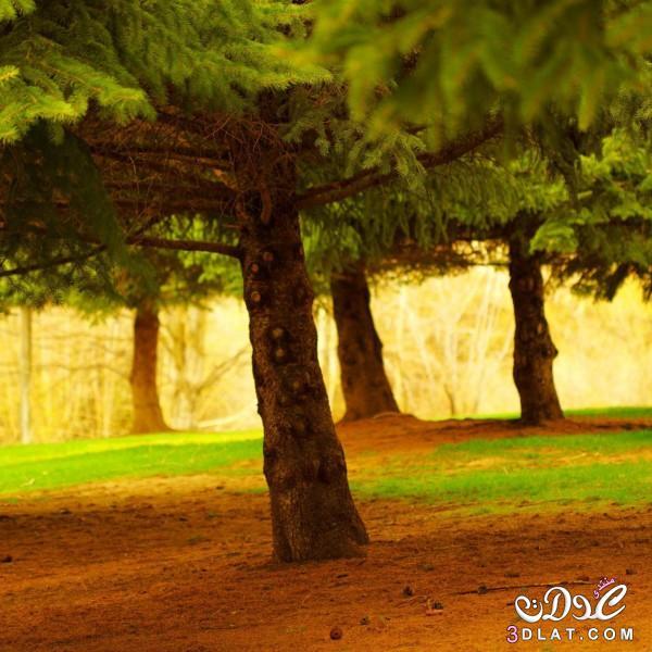 صور طبيعيه للنباتات والاشجار والطرق روعه,صور طبيعيه مذهله ,صور طبيعيه متنوعه 2015 3dlat.com_04_2014)Pi