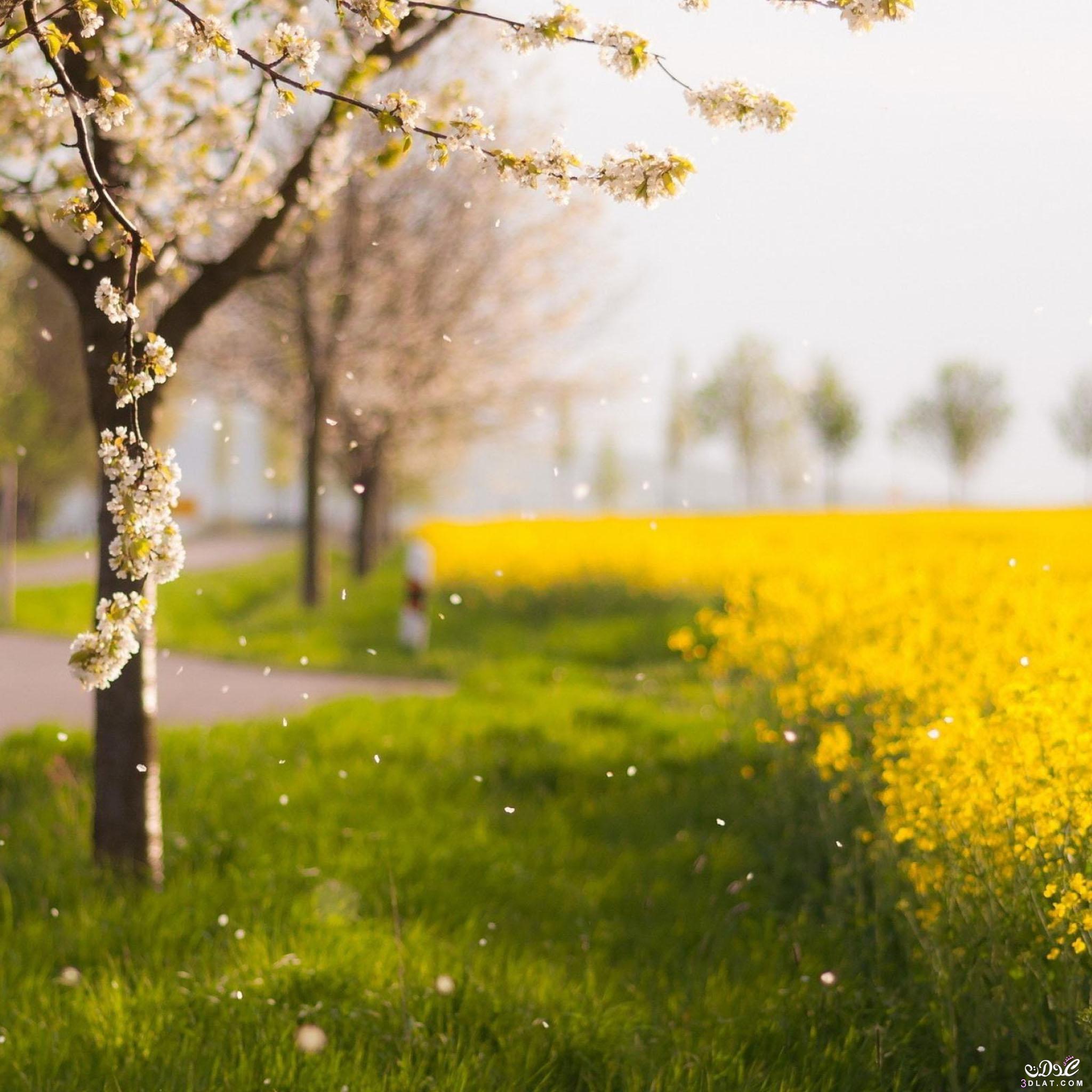 صور طبيعيه للنباتات والاشجار والطرق روعه,صور طبيعيه مذهله ,صور طبيعيه متنوعه 2015 3dlat.com_04_2014)Ye