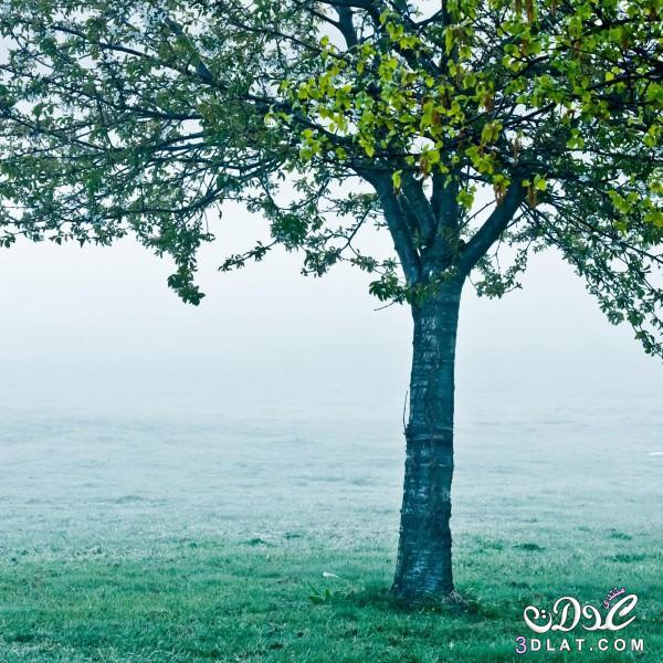 صور طبيعيه للنباتات والاشجار والطرق روعه,صور طبيعيه مذهله ,صور طبيعيه متنوعه 2015 3dlat.com_04_2014)ee