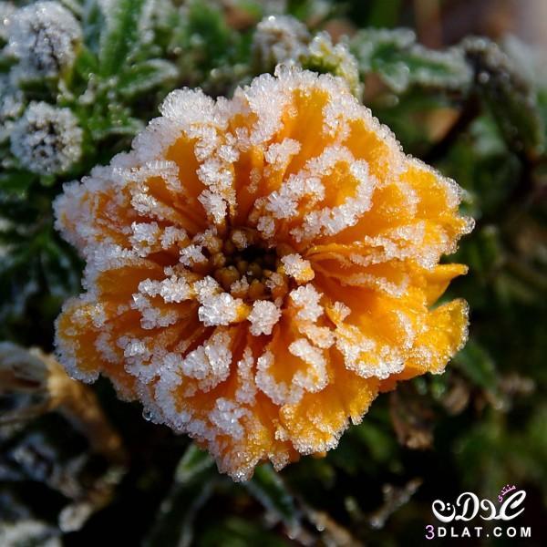 صور طبيعيه للنباتات والاشجار والطرق روعه,صور طبيعيه مذهله ,صور طبيعيه متنوعه 2015 3dlat.com_04_2014)fd