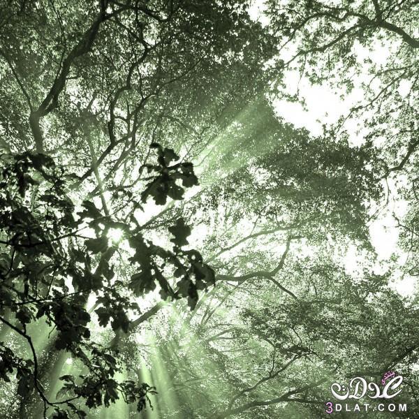 صور طبيعيه للنباتات والاشجار والطرق روعه,صور طبيعيه مذهله ,صور طبيعيه متنوعه 2015 3dlat.com_04_2014)gg