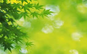 صور طبيعيه للنباتات والاشجار والطرق روعه,صور طبيعيه مذهله ,صور طبيعيه متنوعه 2015 3dlat.com_04_2014)im
