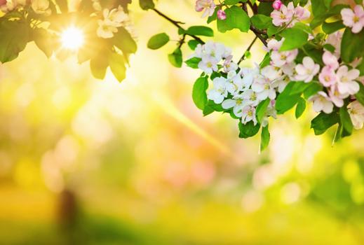 صور طبيعيه للنباتات والاشجار والطرق روعه,صور طبيعيه مذهله ,صور طبيعيه متنوعه 2015 3dlat.com_04_2014)na
