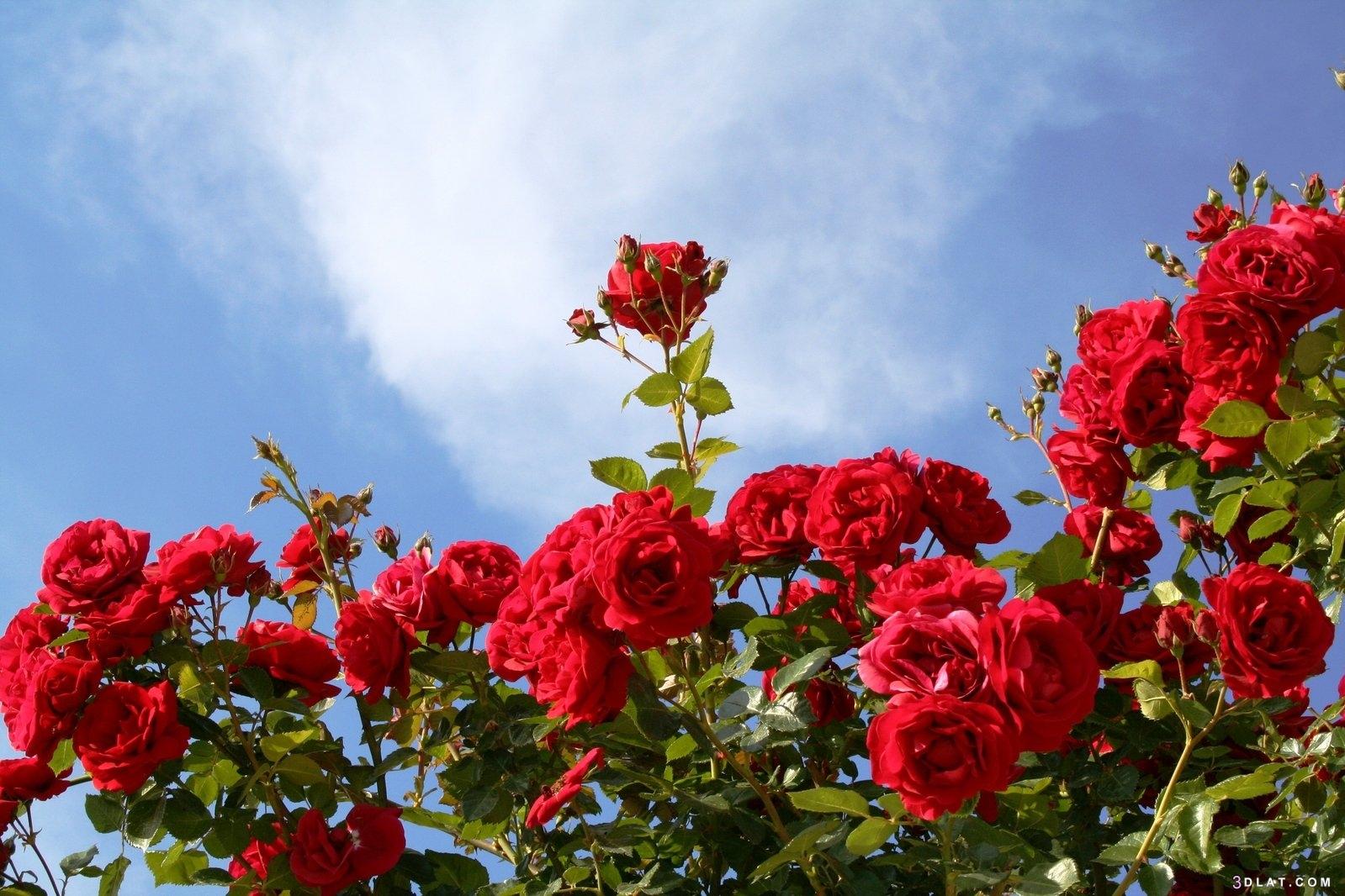 مجموعة زهور عالية الجودة ،أجمل مجموعة 3dlat.com_07_19_1ea5