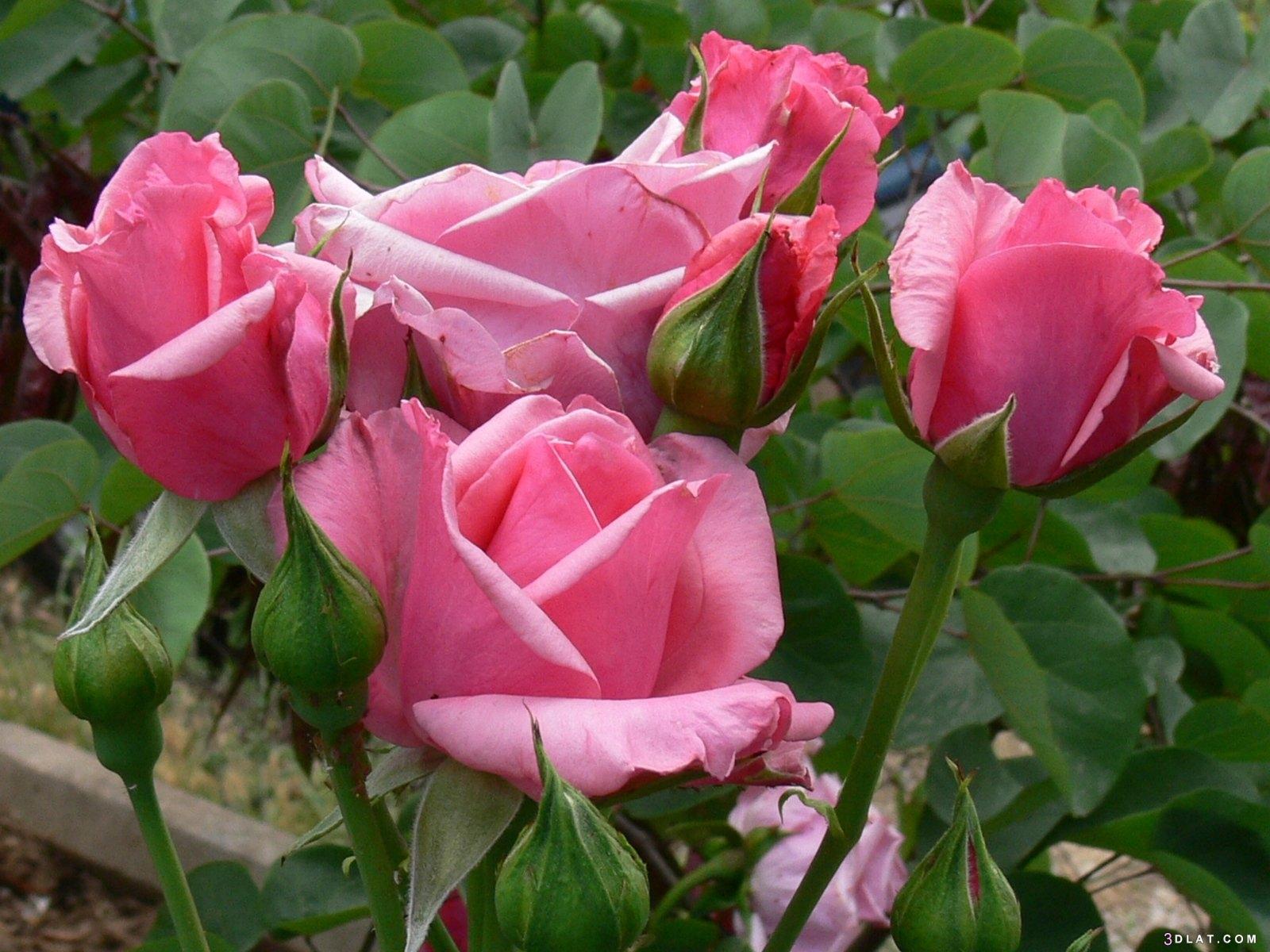 مجموعة زهور عالية الجودة ،أجمل مجموعة 3dlat.com_07_19_589c