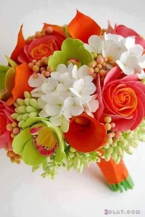 مجموعة زهور عالية الجودة ،أجمل مجموعة 3dlat.com_07_19_ae42