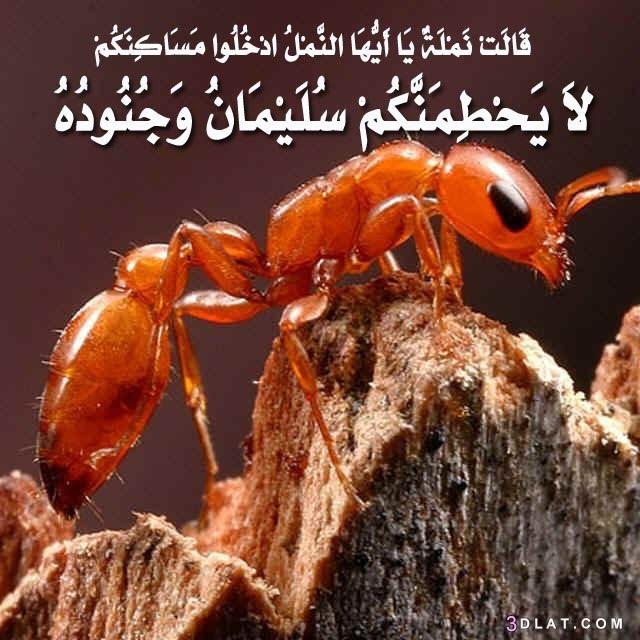 قصة نبي الله سليمان بن داود عليهما السلام 3dlat.com_08_18_7003