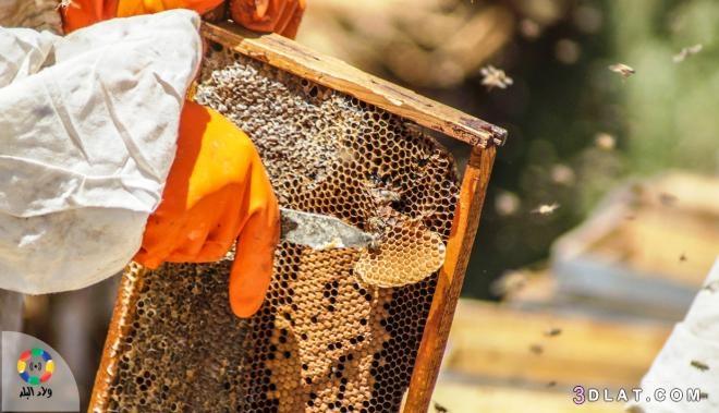 السر, النحل, بشكل, بناء, سداسي؟, لخليته, وراء