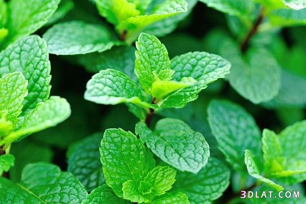 أعشاب طبيعية للاسترخاء وعلاج الاكتئاب 3dlat.com_10_18_5e68