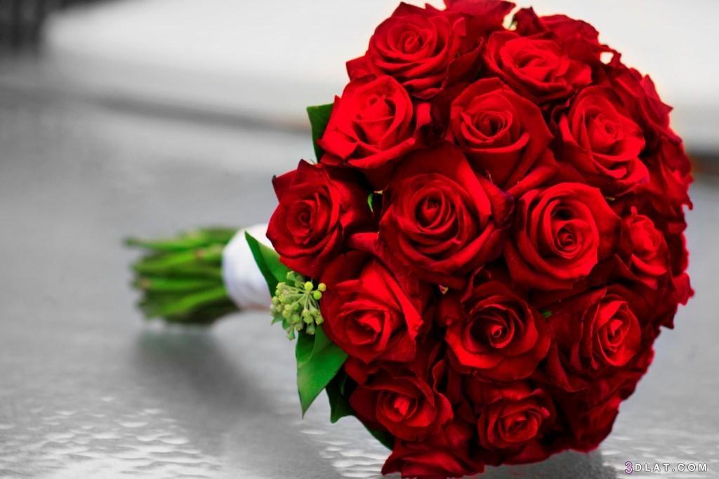 جوري بتدرجات ألوانه الحمراء ,ورد احمر 3dlat.com_11_18_3f1c