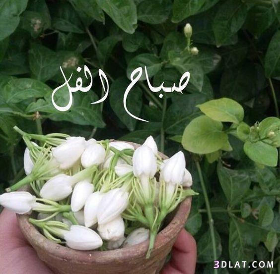 صباح الخير لصباح الخير 2019 صباح 3dlat.com_12_18_5124