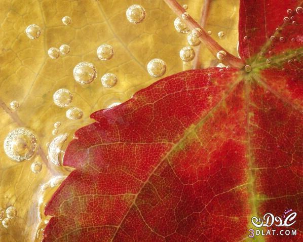 مناظر طبيعيه للاوراق الشجر , صور طبيعيه لاوراق الشجر , احلى صور لاورق شجر 3dlat.com_1389797060