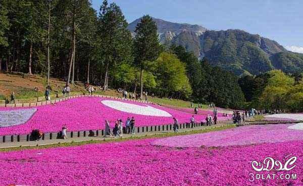 جديقة الزهور العملاقة اليابان