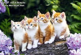 اجمل صور طبيعية للحيوانات والطيور سبحان الله 3dlat.com_1389941933