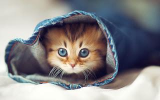 قطط, صور قطط جديده2014 , قطط كيووت, صور قطط مضحكه, صور قطط مرحة , صور قطط جديده 3dlat.com_1390169830