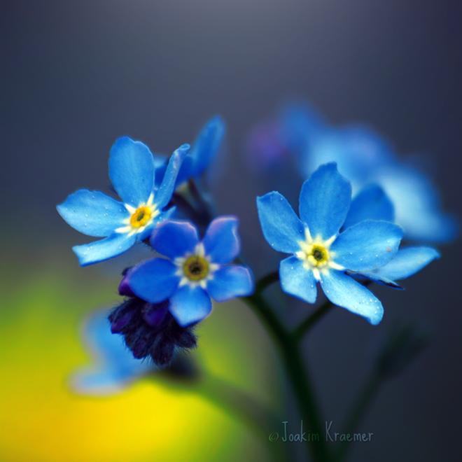 صور ورود طبيعية 2014,مناظر جميلة من الطبيعة,أزهار وورود رومانسية جميلة 3dlat.com_1390174245