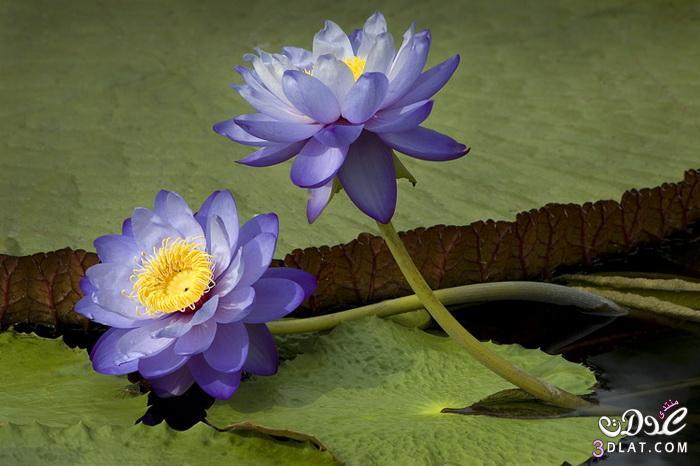 صور ورود طبيعية 2014,مناظر جميلة من الطبيعة,أزهار وورود رومانسية جميلة 3dlat.com_1390174248