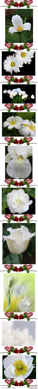 صور ورود طبيعية 2014,مناظر جميلة من الطبيعة,أزهار وورود رومانسية جميلة 3dlat.com_1390174249