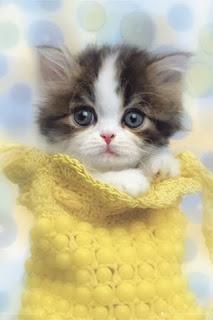 قطط, صور قطط جديده2014 , قطط كيووت, صور قطط مضحكه, صور قطط مرحة , صور قطط جديده 3dlat.com_1390191201