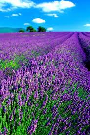 حقول للأزهار ومناظر طبيعية تحفة