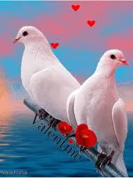 قلوب رومانسية رومانسيات