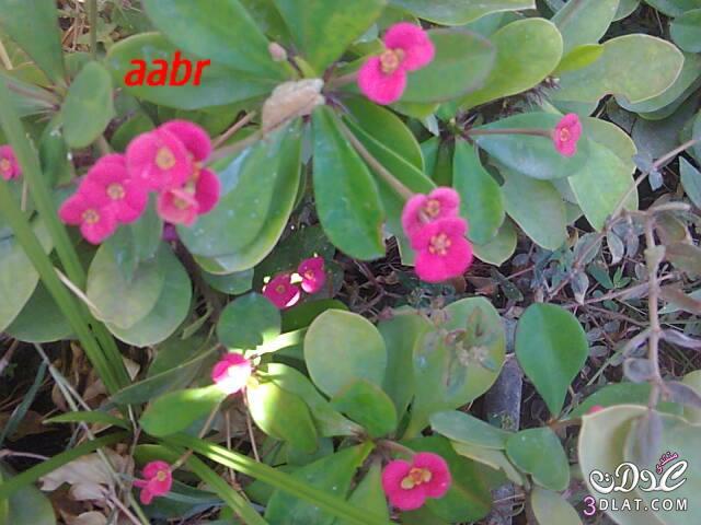 ��� ���� ������ ��� ���� ����� ������ 3dlat.com_1390650053