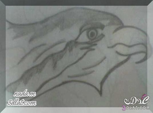 رسوماتى بقلم الرصاص طيور برسماتى