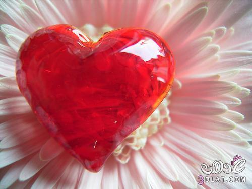 قلوب لحبيب والحبيبه ,صور قلوب
