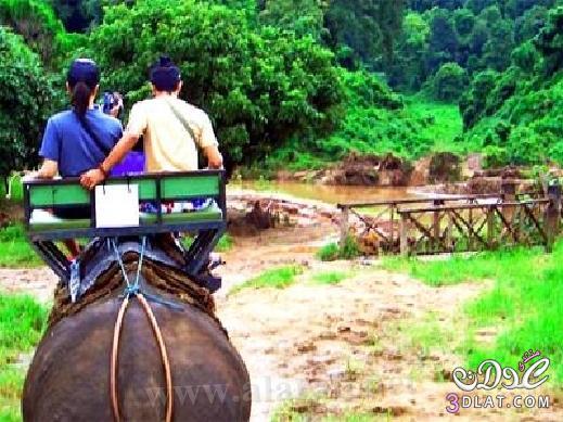 رحلة شيقه مدينة شنغهاي