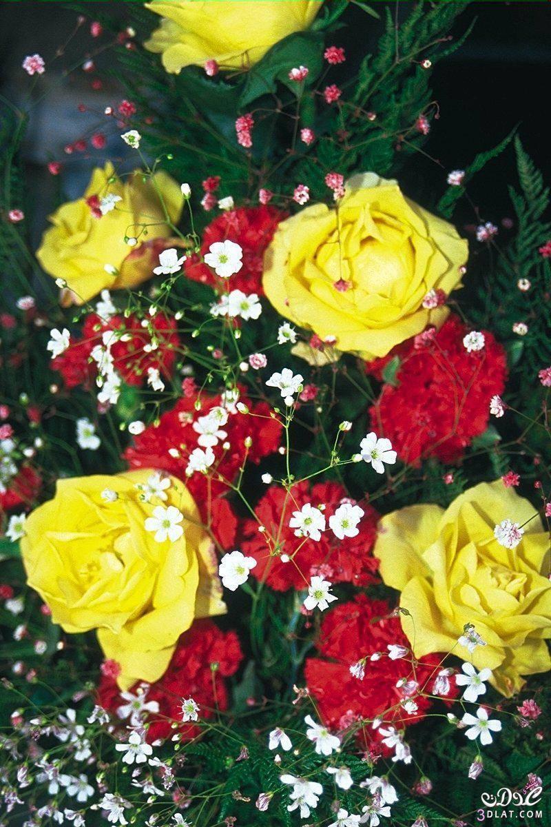 طبيبعية,ورود وزهور,مجموعة الزهور بألوان طبيعية