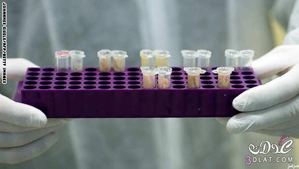 زراعة بشرية داخل مختبر أمريكا