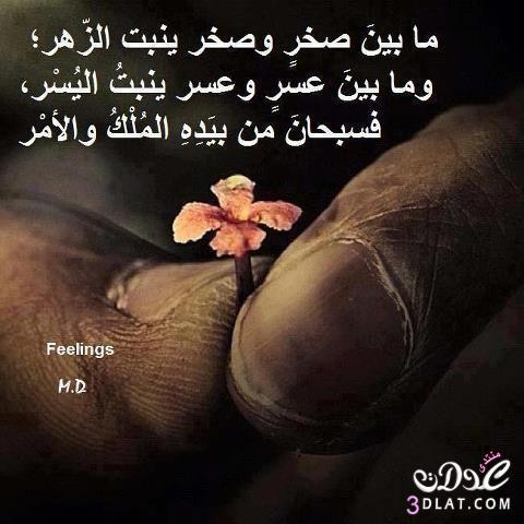 حكم مصورة  - صفحة 5 3dlat.com_13934396373
