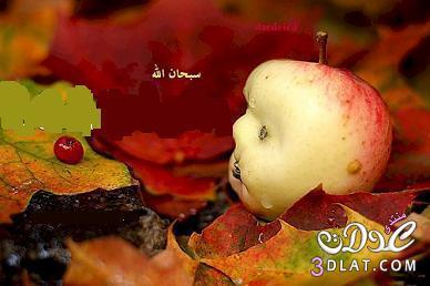 تفاحه انسان سبحان الله