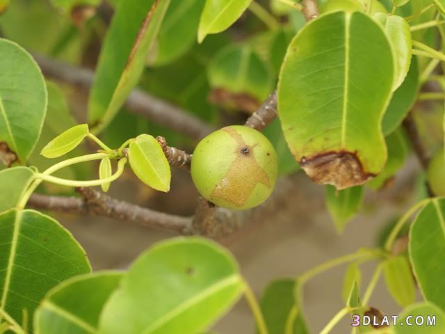 نباتات عليك تلمسها 3dlat.com_13_18_1344
