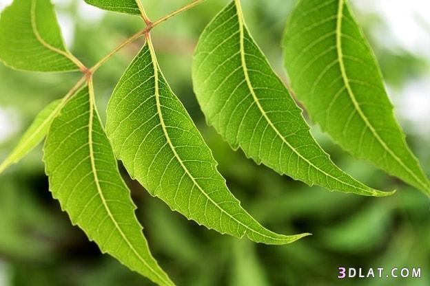 أفضل الأعشاب المضادة للالتهابات 3dlat.com_13_18_2409