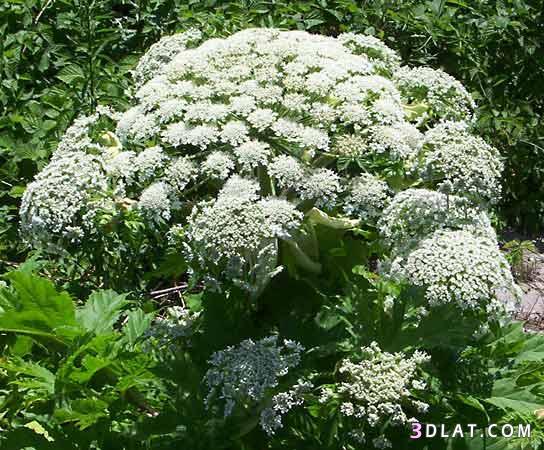 نباتات عليك تلمسها 3dlat.com_13_18_5536