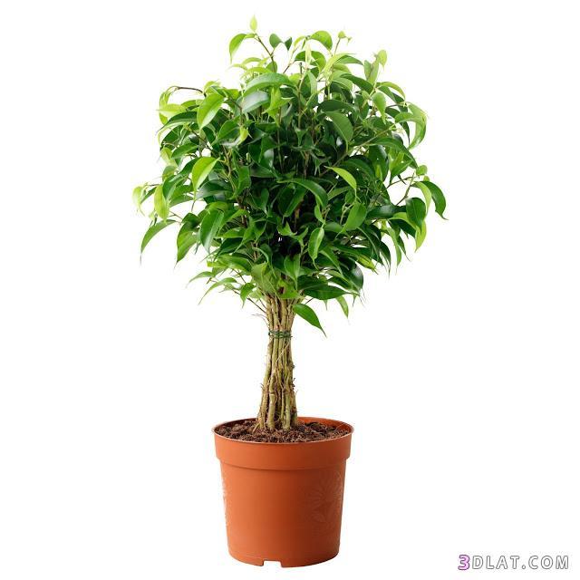 نباتات عليك تلمسها 3dlat.com_13_18_c2ad