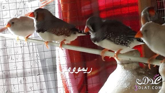[بعدستي] صور عصافير من تصويرى صور عصافيرى صور عصافير 2014 صور عصافير من الطبيعه 3dlat.com_1400098059
