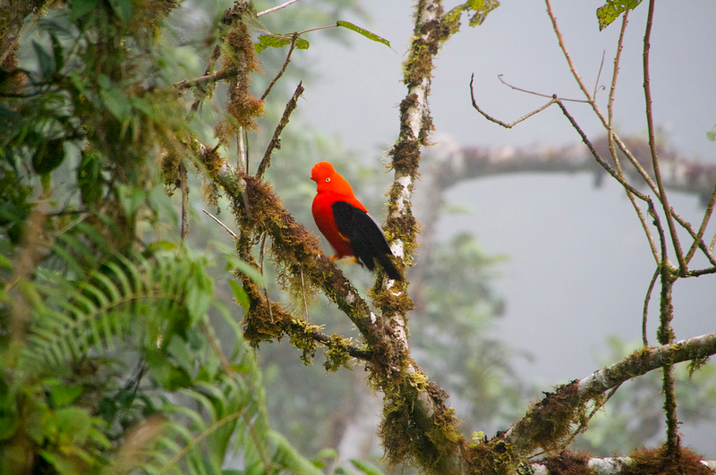 معلومات عن غابات الأمازون أكبر