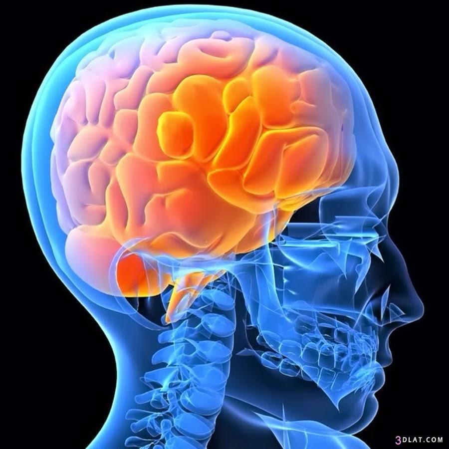 أهم 11 نصيحة للحفاظ على سلامة المخ 3dlat.com_1402680197