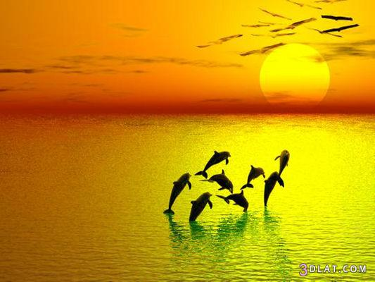 صور للغروب احلى صور الغروب 2014اروع المناظر الطبيعية للغروب 2015 3dlat.com_1403402067